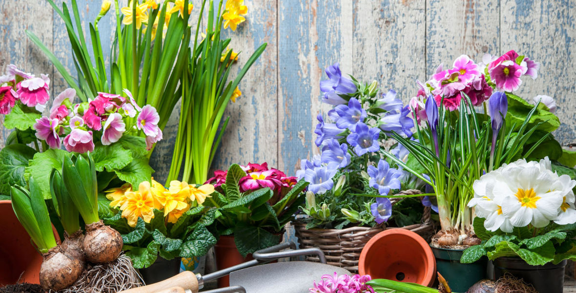 Frühjahrsaustellung am 9 und 10 Mai